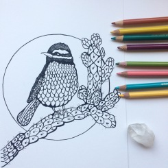 Cactus and CrittersTucson Coloring Book By AudreyDLC (8)